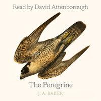 The Peregrine - J.A. Baker