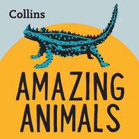 Amazing Animals - Various