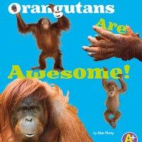 Orangutans Are Awesome! - Allan Morey
