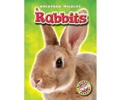 Rabbits - Derek Zobel
