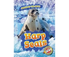 Harp Seals - Rebecca Pettiford