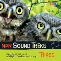 NPR Sound Treks: Birds: Spellbinding Tales of Flight, Feather, and Song - NPR