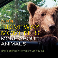 NPR Driveway Moments: More about Animals - Christopher Joyce