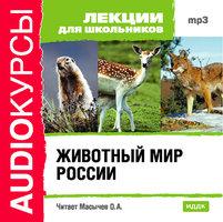 Животный мир России - Лекции для школьников