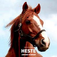 Heste - Cecilie Bogh