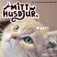 Mitt husdjur: Katt - Jonas Knutell