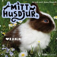 Mitt husdjur: Kanin - Jonas Knutell