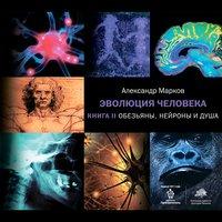Эволюция человека. Книга вторая. Обезьяны, нейроны и душа - Александр Марков