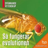 Så fungerar evolutionen - Bokasin