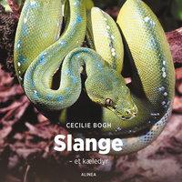 Slange - et kæledyr - Cecilie Bogh