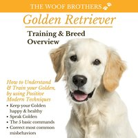 Golden Retriever: Training & Breed Overview - The Woof Brothers