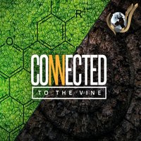 Connected To The Vine - Evangelist Nathan Morris