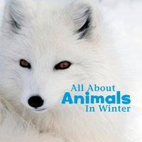 All About Animals in Winter - Martha Rustad