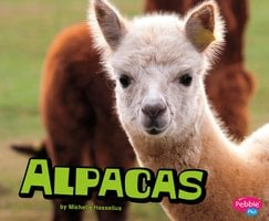 Alpacas - Michelle Hasselius