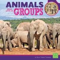 Animals That Live in Groups - Kelsi Tjernagel