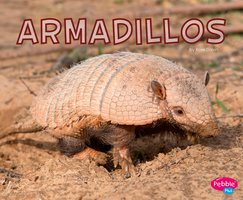 Armadillos - Rose Davin
