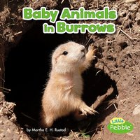 Baby Animals in Burrows - Martha Rustad