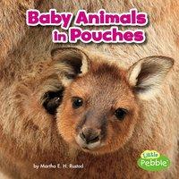 Baby Animals in Pouches - Martha Rustad