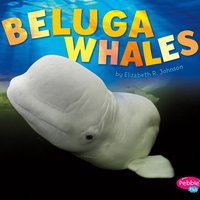 Beluga Whales - Elizabeth R. Johnson
