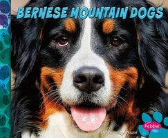 Bernese Mountain Dogs - Allan Morey