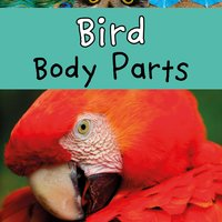 Bird Body Parts - Clare Lewis