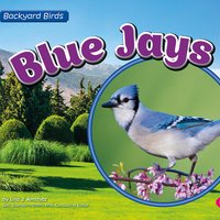 Blue Jays - Lisa Amstutz