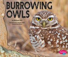 Burrowing Owls - Melissa Hill