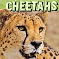 Cheetahs - Tammy Gagne