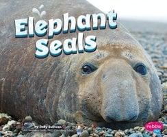Elephant Seals - Megan Peterson