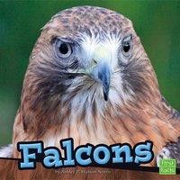 Falcons - Ashley Norris