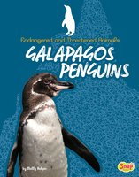Galapagos Penguins - Molly Kolpin