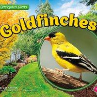 Goldfinches - Lisa Amstutz