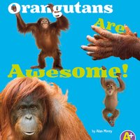 Orangutans Are Awesome! - Allan Morey