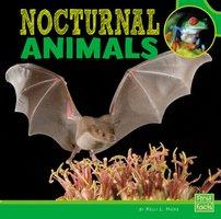 Nocturnal Animals - Kelli Hicks