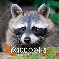 Raccoons - G.G. Lake