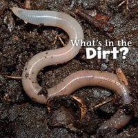 What's in the Dirt? - Martha Rustad