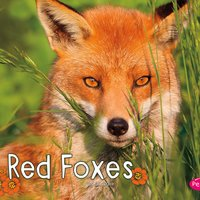 Red Foxes - G.G. Lake