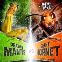 Praying Mantis vs. Giant Hornet - Alicia Z. Klepeis