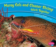 Moray Eels and Cleaner Shrimp Work Together - Martha Rustad