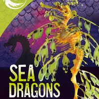 Sea Dragons - Jody Rake