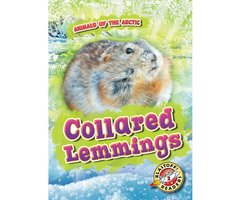 Collared Lemmings - Rebecca Pettiford
