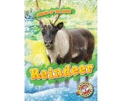 Reindeer - Rebecca Pettiford