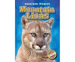 Mountain Lions - Kristin Schuetz