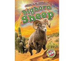 Bighorn Sheep - Patrick Perish
