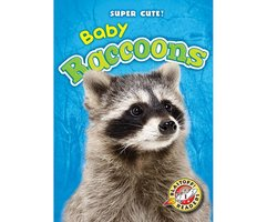 Baby Raccoons - Megan Borgert-Spaniol