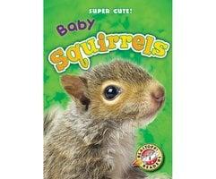 Baby Squirrels - Megan Borgert-Spaniol