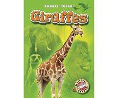 Giraffes - Kari Schuetz