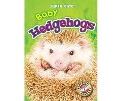 Baby Hedgehogs - Megan Borgert-Spaniol