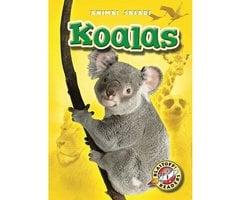 Koalas - Kari Schuetz
