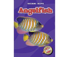 Angelfish - Colleen Sexton